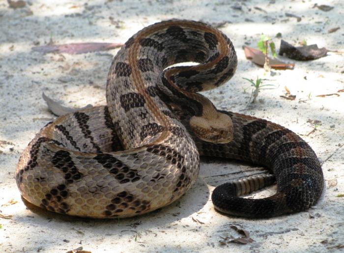 К чему снятся змеи в речке