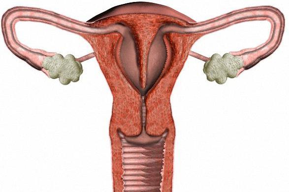 Что такое придатки матки у женщин 1