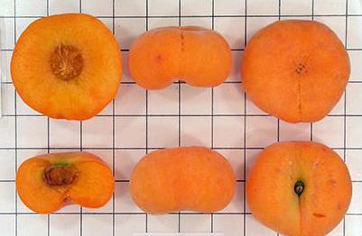 польза плоских персиков