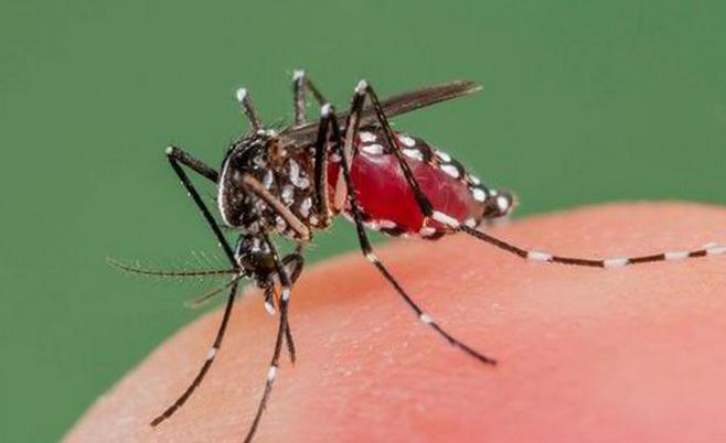 why do mosquitoes in nature