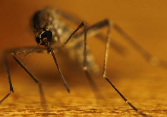 сколько паразитов живет в организме человека
