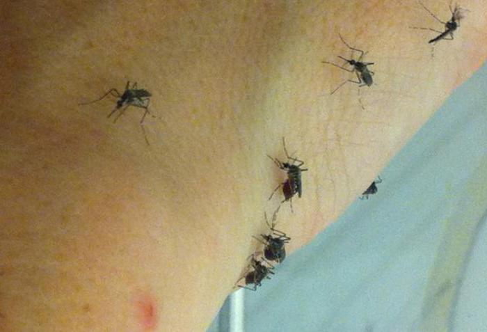 how much does a female mosquito live