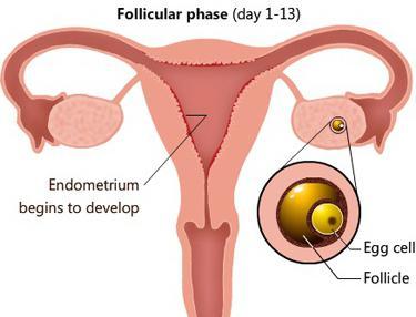 забеременела после увеличения грудины за 3 дня