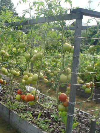 метод митлайдера овощи