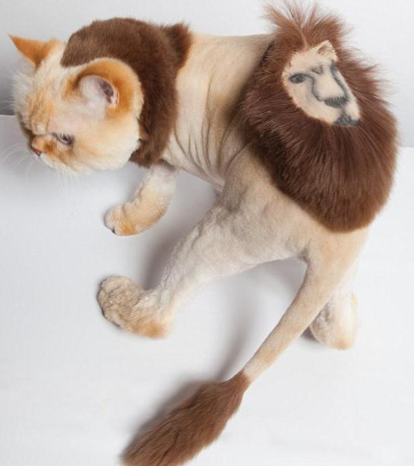 стрижка кошек цена