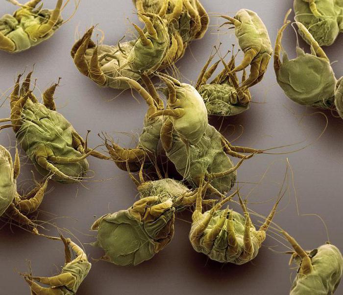 лекарство от паразитов в организме человека курс