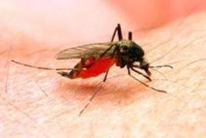 how to dilute vanillin from midges