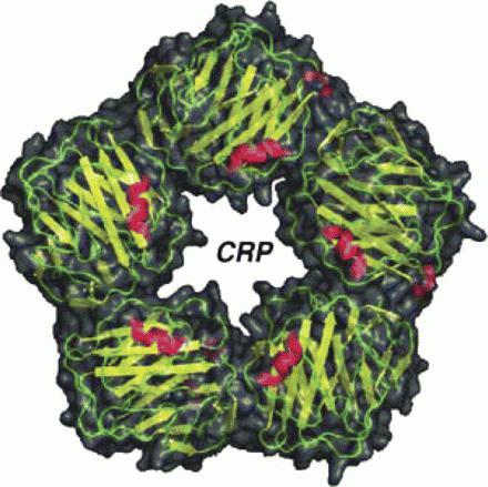 с реактивный белок норма