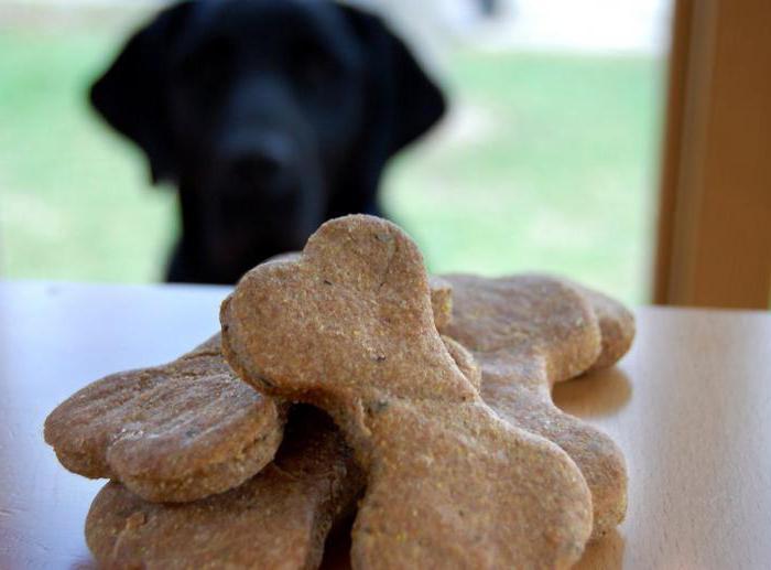 dog treats reviews