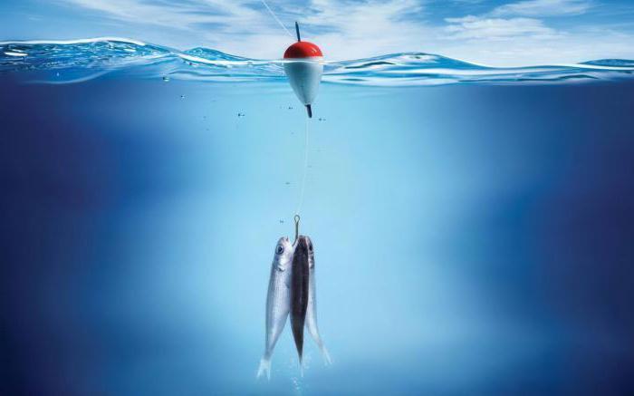 супер приманка для рыб