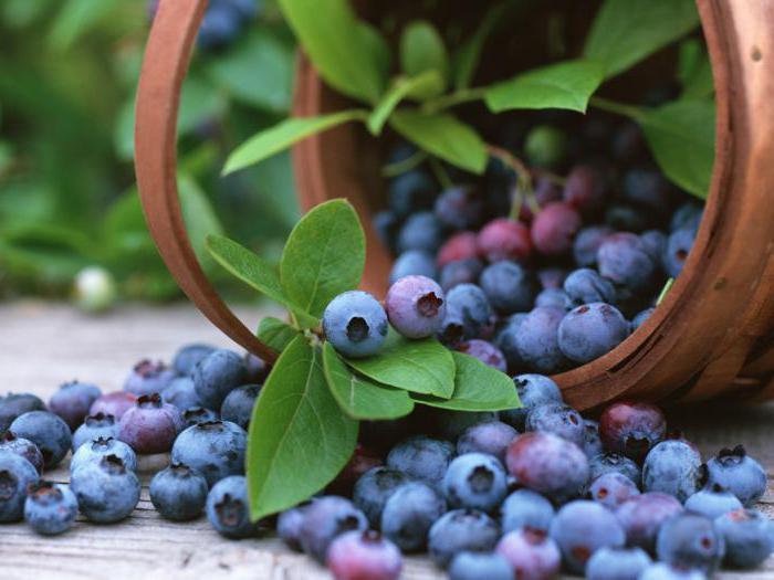 Голубика: полезные свойства ягоды