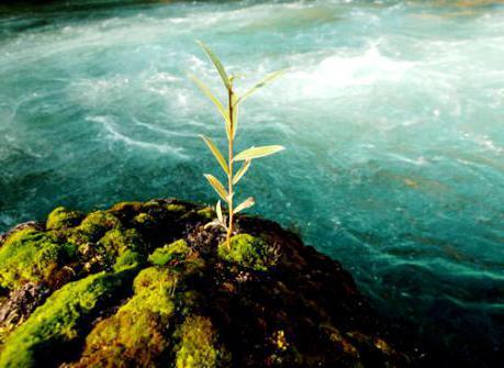 Павловское водохранилище, рыбалка, отдых, отзывы