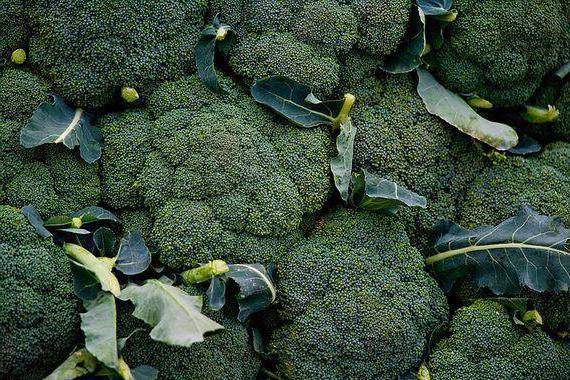 broccoli disease