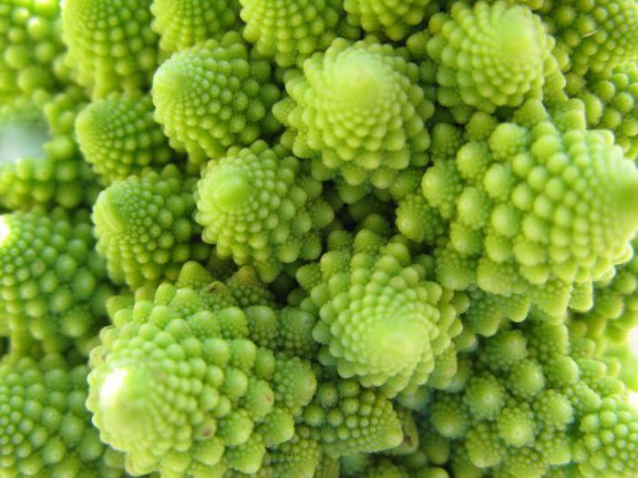 when to cut broccoli
