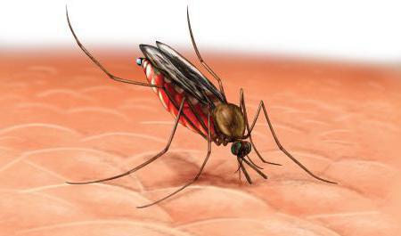 Как называется большой комар