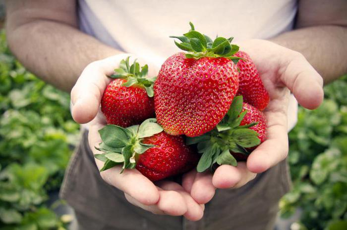 strawberry transplant