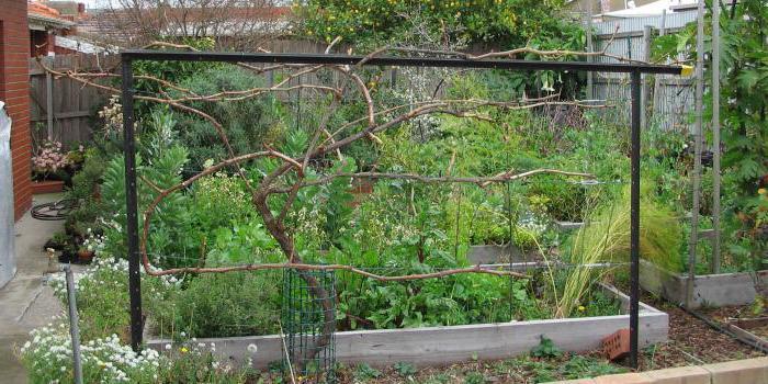 Шпалера на даче своими руками фото фото 311
