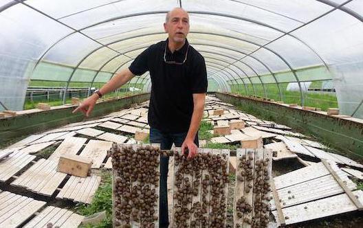 Виноградная улитка в домашних условиях ферма