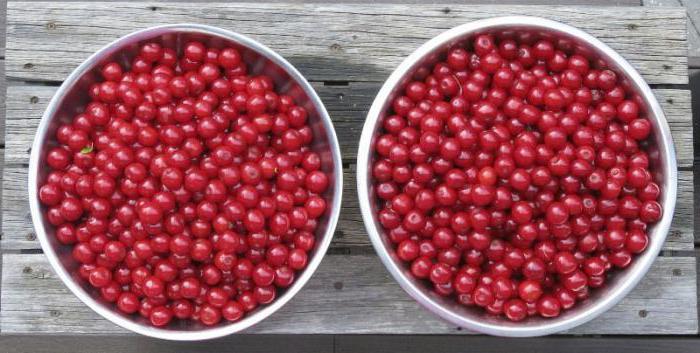Cherry tincture on vodka recipe