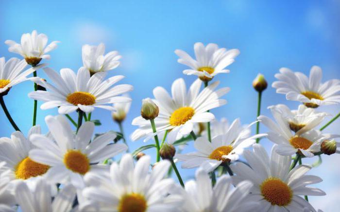 картинки на рабочий стол лето цветы № 517559 без смс