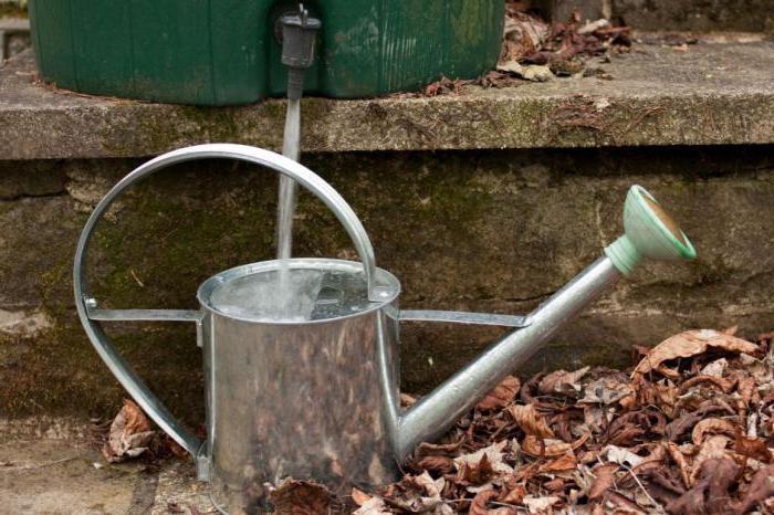 как часто поливать лук