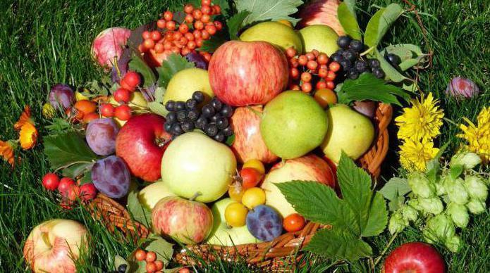 смесовое какие фрукты и ягоды выгодно выращивать материал