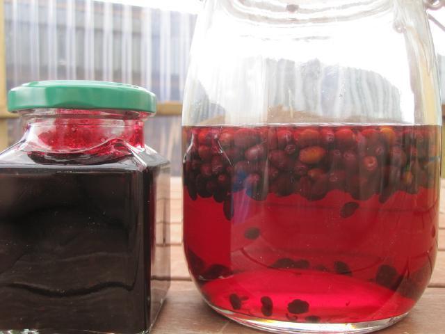 жимолость самая ранняя ягода польза посадка и уход