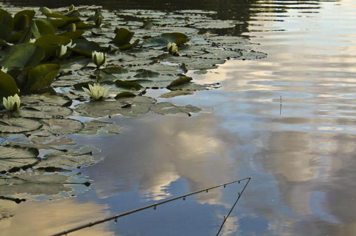 прикормка на леща летом на течении