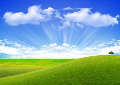 философия почему трава зеленая