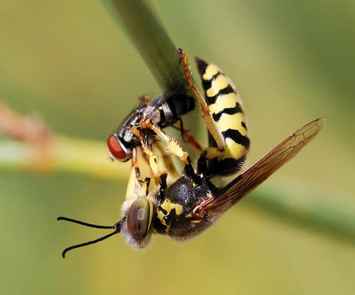 wasps kinds of photos