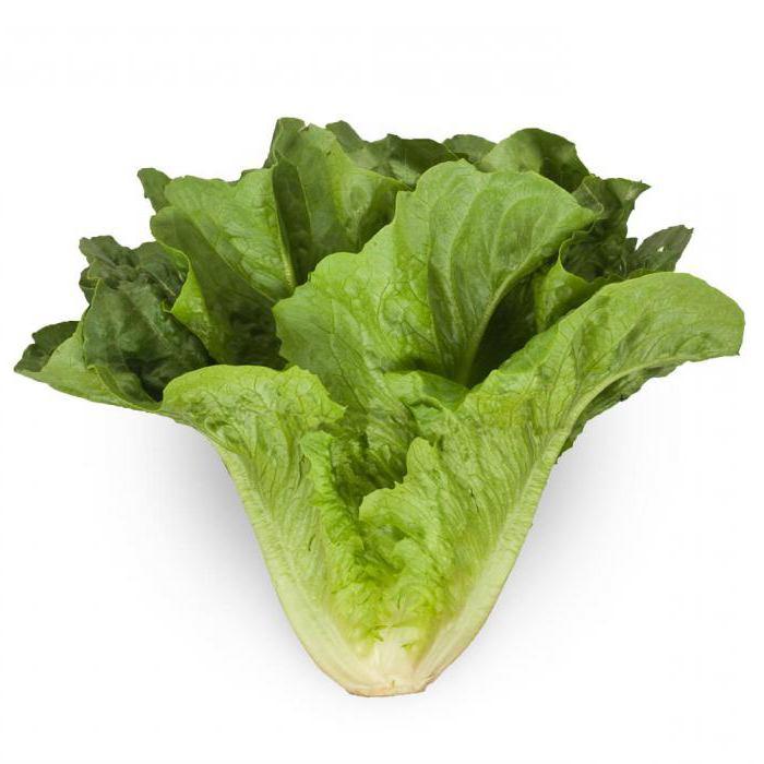 Салат листовой картинка детская