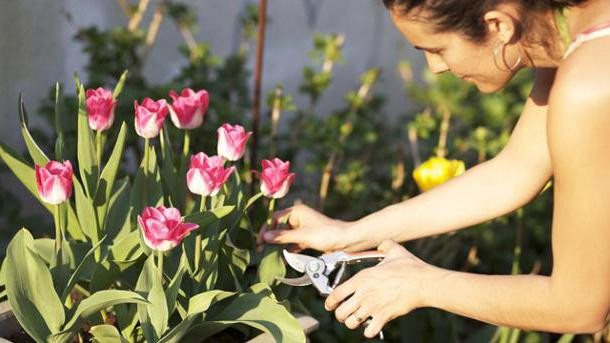 when to dig out tulips after flowering