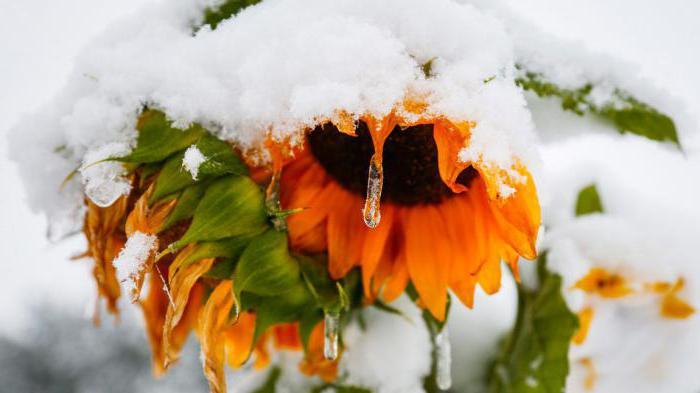 сонник летом пошел снег