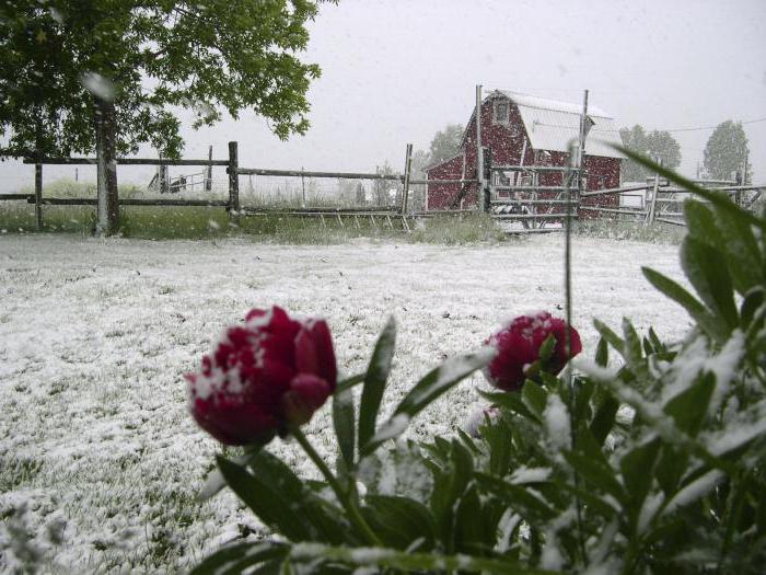 сонник снег идет летом