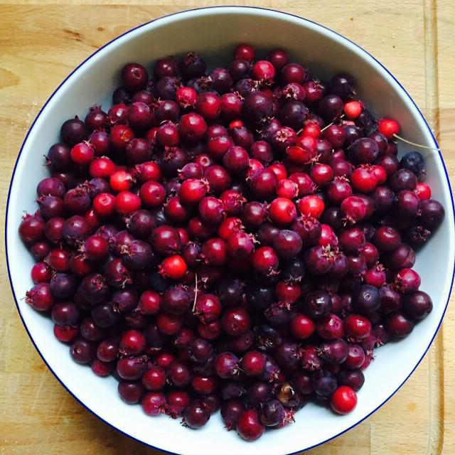 berry berries for the winter