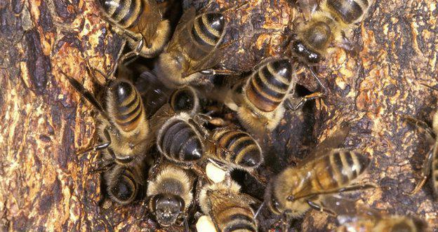 Как избавиться от пчёл в домашних условиях
