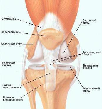 После бега болит под коленом что делать делают ли операцию в мурманске на коленные суставы