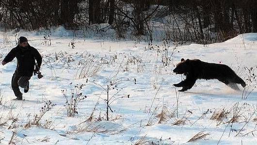 поведение медведя