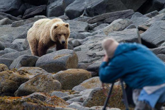 случаи нападения медведя на человека