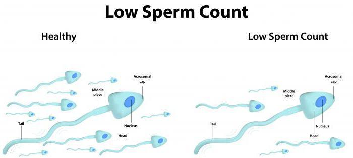 spermogramma-v-krasnodare-stoimost
