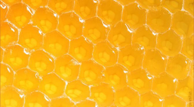 sainfoin honey its properties and use