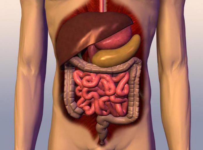 диета по правильному питанию меню