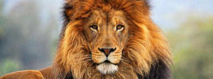 рожднные под знаком льва