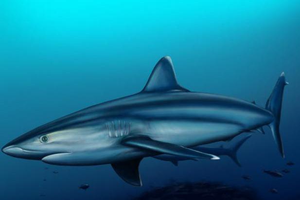 водятся ли акулы в черном море фото