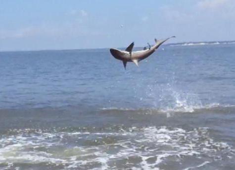 есть ли акулы в черном море в сочи