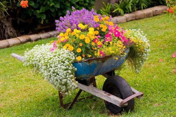 Садовая камелия: выращивание в открытом грунте: посадка и уход