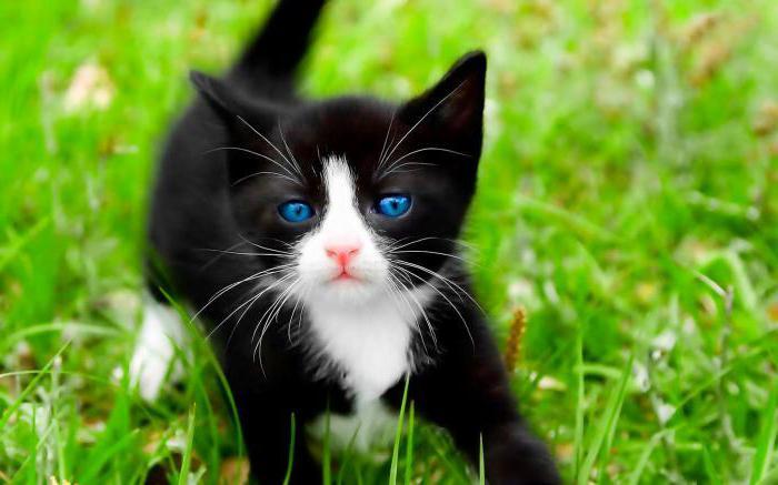 Прикольные клички для чёрных котов