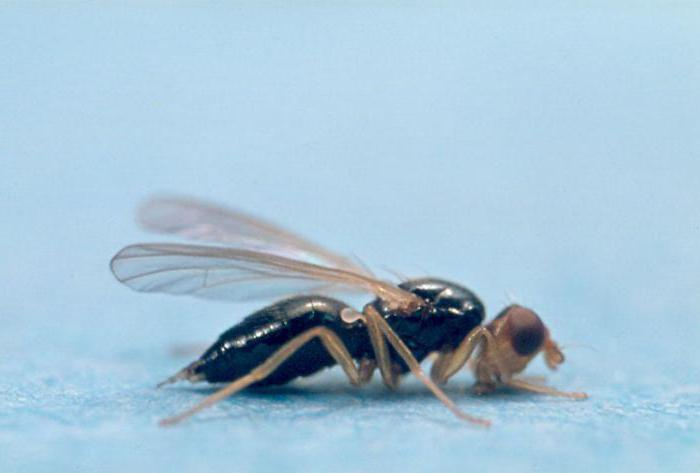 Carrot fly control methods