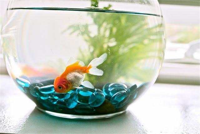 рыбка для маленького аквариума