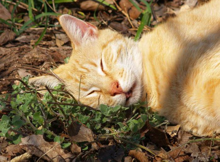 Sleeping pills for cats